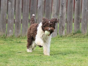 dog with ball playing in the yard
