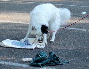 dog scenting